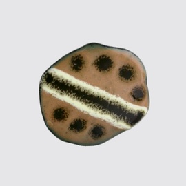 copy-of-brown-enamel-button