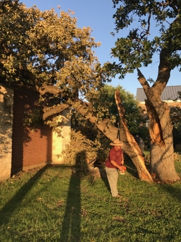 Tree Services in Southlake, Texas