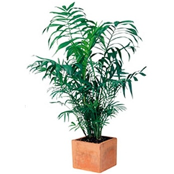 Interior plant rental Chicago