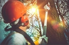 Tree Pruning  Services Calgary AB